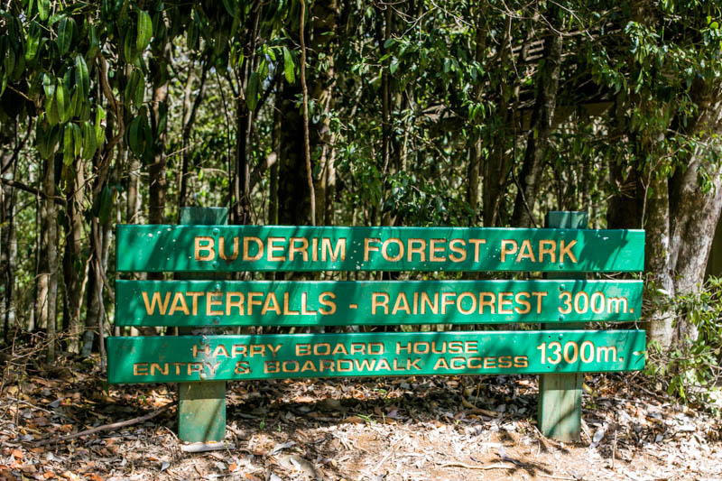 Buderim Forest-7