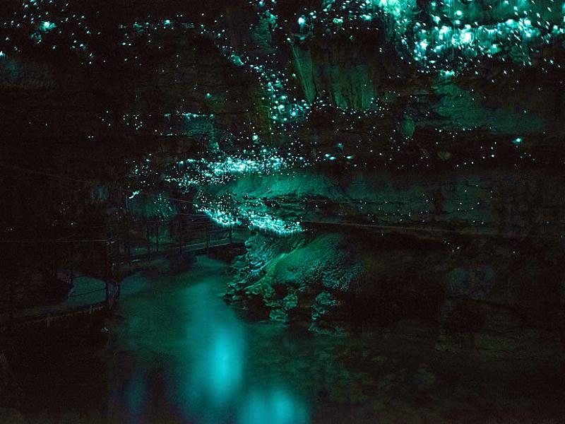 adventure-waitomo-glowworm-caves-800x600