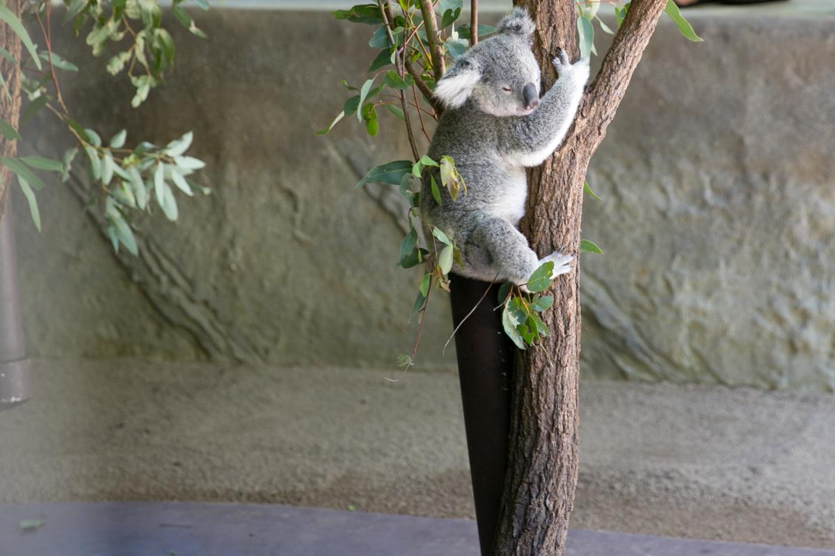 Australia Zoo
