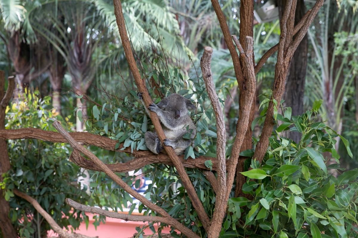 Australia Zoo-12
