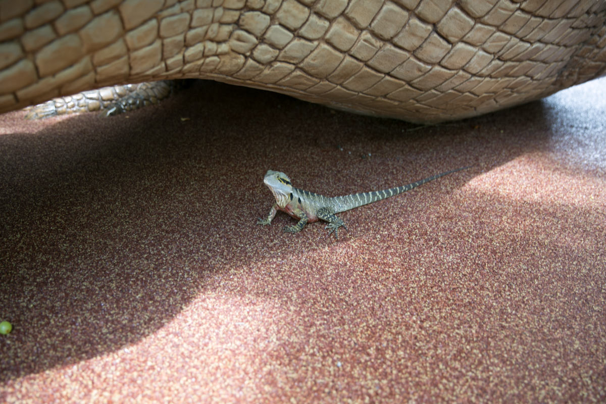 Australia Zoo-14
