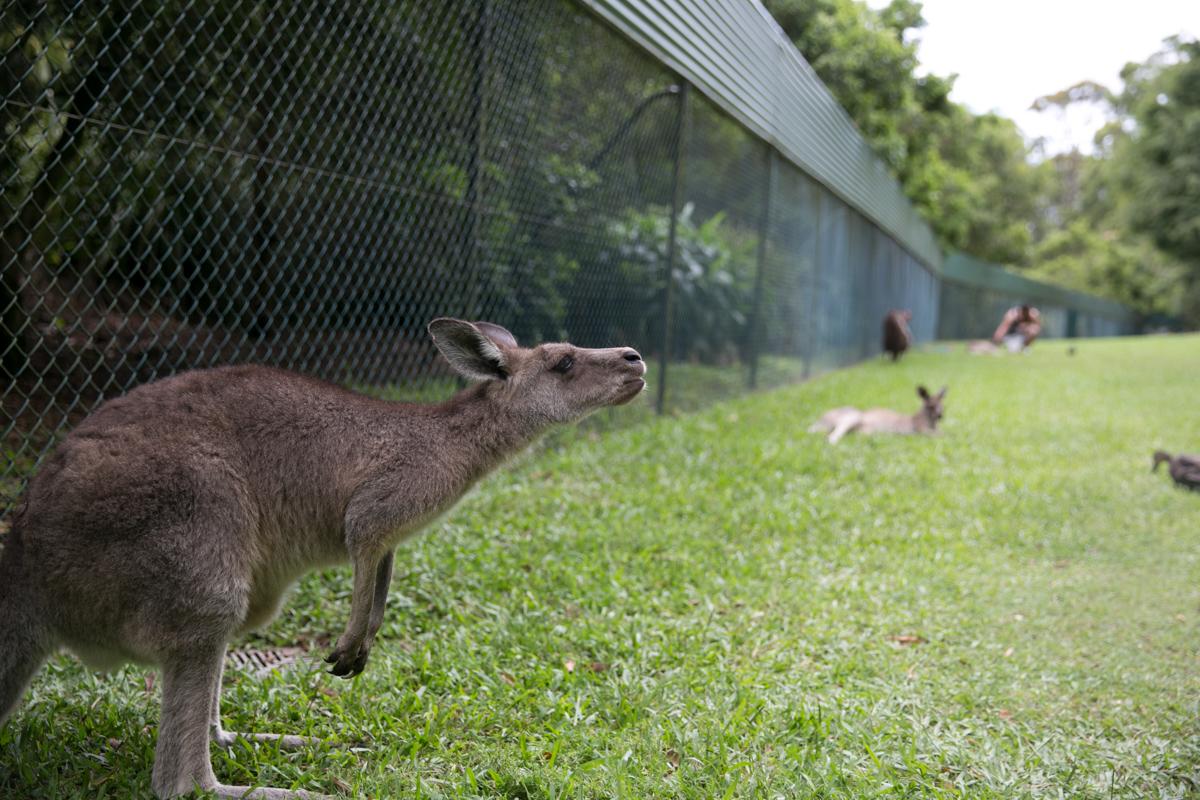 Australia Zoo-22
