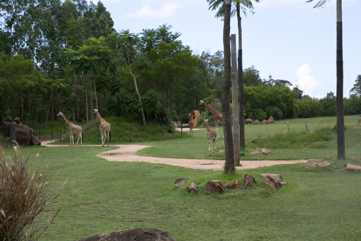 Australia Zoo-30
